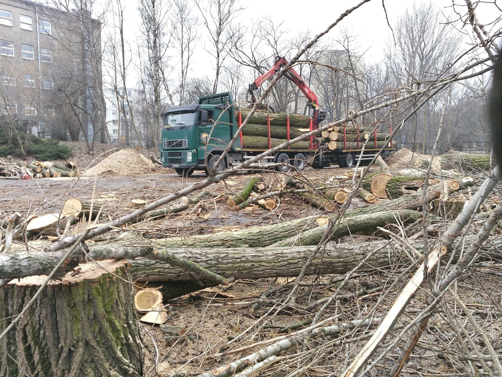 Wycinka drzew w Warszawie - park na Powiślu